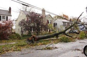 Toppled trees from Sandy knocked out power to communities throughout New Jersey.